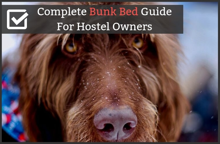 Best Hostel Bunk Bed Guide